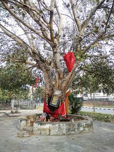Hindus Worship Trees-Plants To Seek Divine Blessings - You can Too!