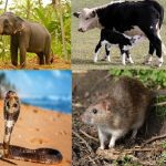 Do Worship [Not Hurt] India's Sacred Animals For Their Blessings