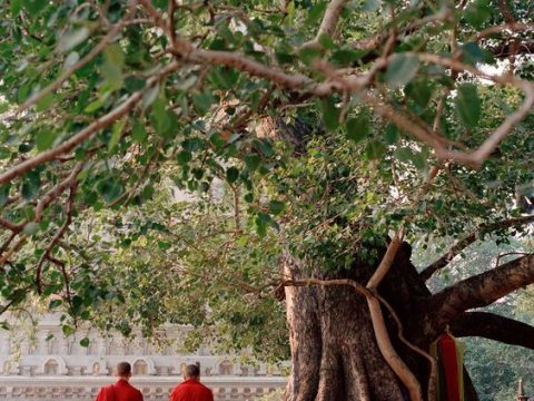 Praise Peepal Tree & Manage To Sustain Oxygen Balance In Your Body
