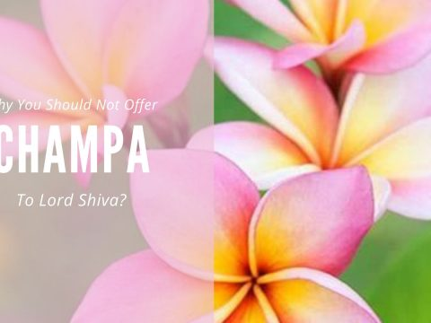 Why Are Not Champa Flowers Offered To Lord Shiva?