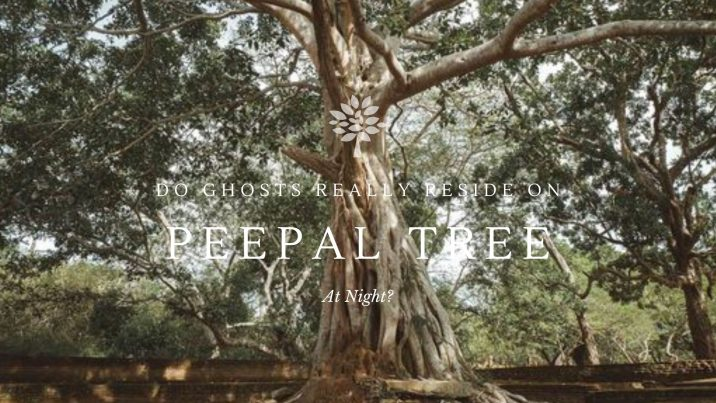 Why Is It Said That Ghosts Reside On The Peepal Tree At Night Dharma WeRIndia