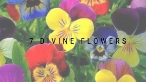 7 Divine Flowers You Must Include While Worshipping Hindu Deities