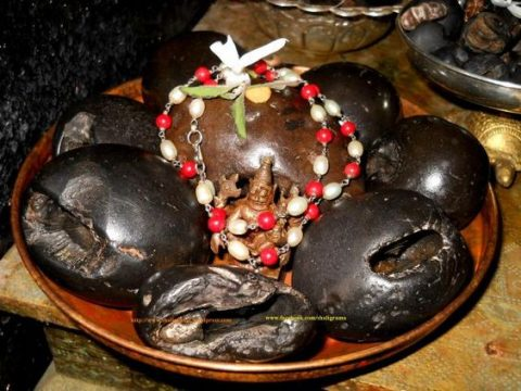 Did You Know- Worshipping A Shaligram Can Bring You Great Fortune?