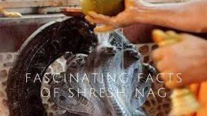 Fascinating Facts Of Shresh Nag- The Most Loyal Devotee Of Lord Vishnu