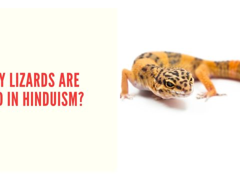 Why Hindus Consider Touching Lizard A Bad Omen?